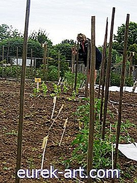 # 18 Lazy Man's Tomato Staking