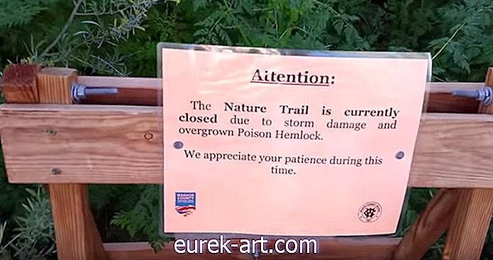 Ta priljubljeni park v Nevadi doživlja izbruh velikega strupa iz hemoza